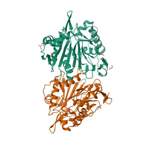 NTAN1 logo
