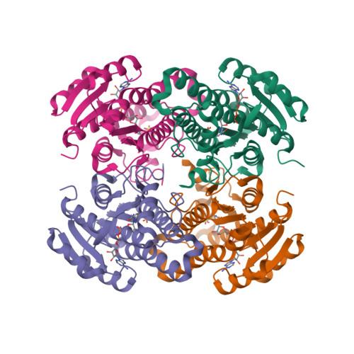 BDH2 logo