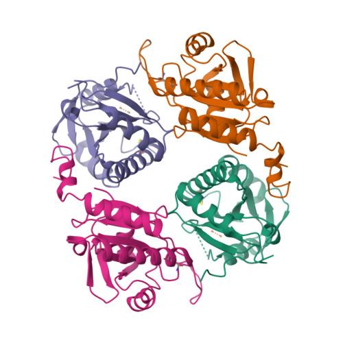 SCO1 logo