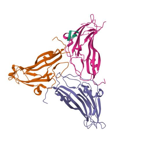 COAT logo
