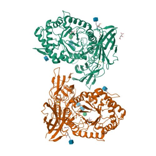 IDUA logo