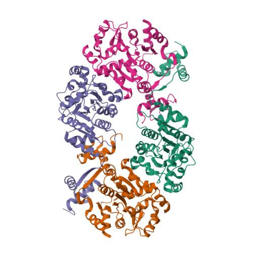 lsrR logo