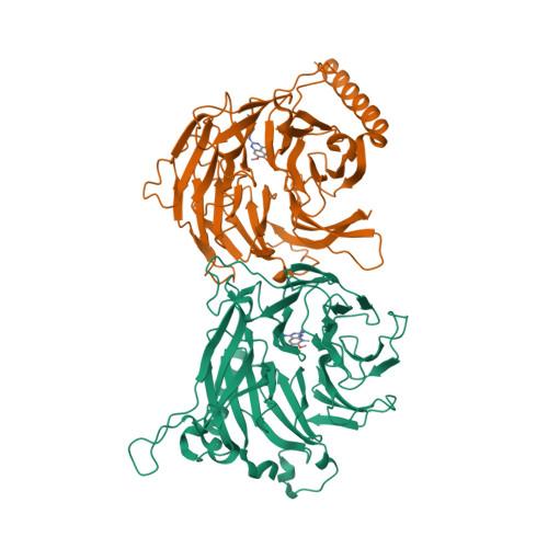 RBBP4 logo