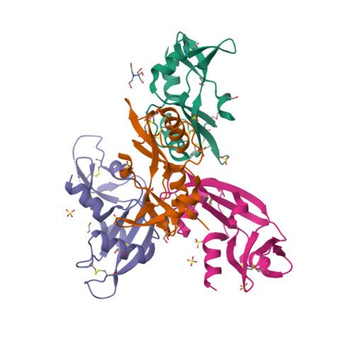 ANG logo