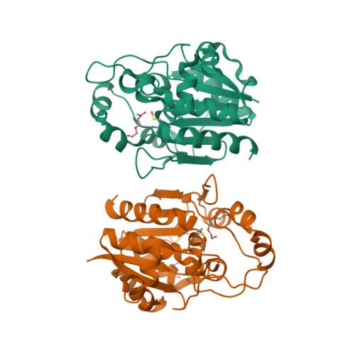 HSP33 logo
