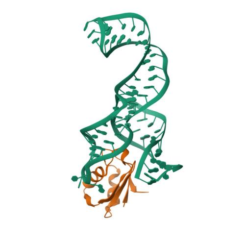dbpA logo