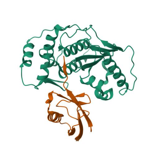 SENP1 logo