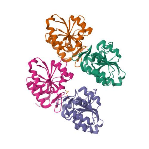 sorB logo