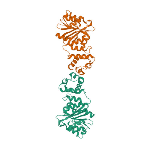 rRNA adenine N(6)-methyltransferase family