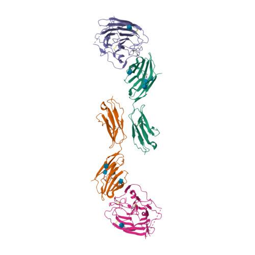 Ceacam1 logo