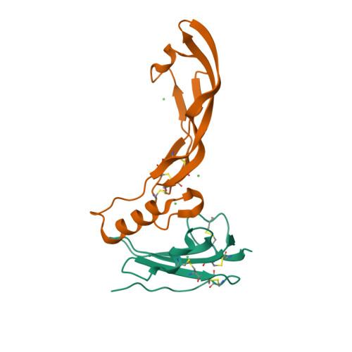ACVRL1 image