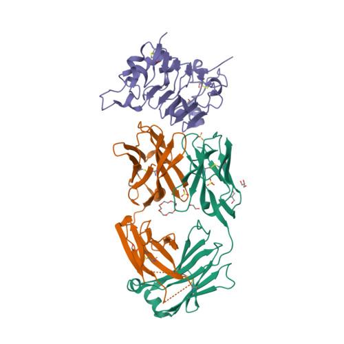 Panitumumab structure rendering