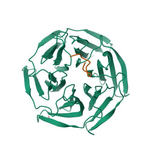 NFE2L2 logo