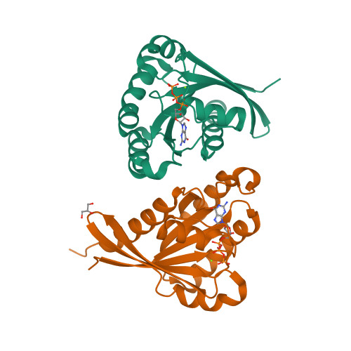 RAB8A logo