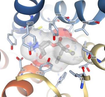 Explore Ligand Interactions in 3D