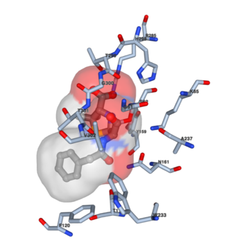 Guide to Understanding PDB Data: Small Molecules