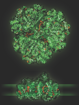 Browse the Biology of Plants and More at PDB-101