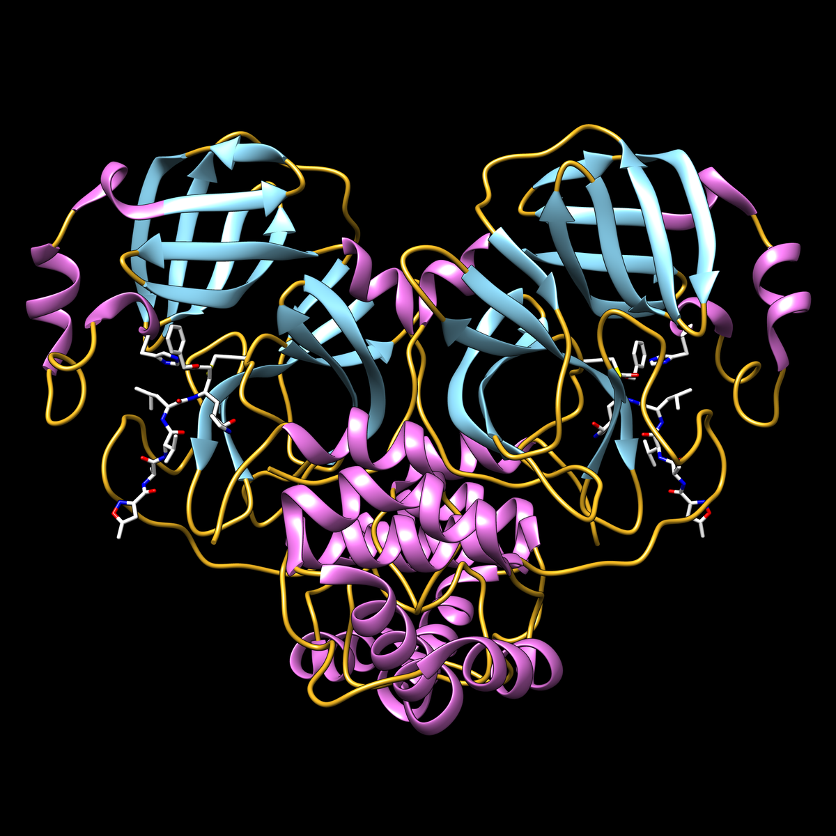 COVID-19 main protease protein with inhibitor N3 (white stick representation) covalently bound to residue cysteine 145 in the protease active site. Display shows secondary structure (helices in magenta, strands in cyan, loops in yellow). Adjacent active site residue histidine 41 is also shown.