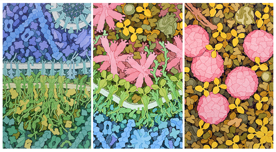 """<a href=""""http://pdb101.rcsb.org/sci-art/goodsell-gallery"""">Molecular Landscapes by David S. Goodsell</a>"""