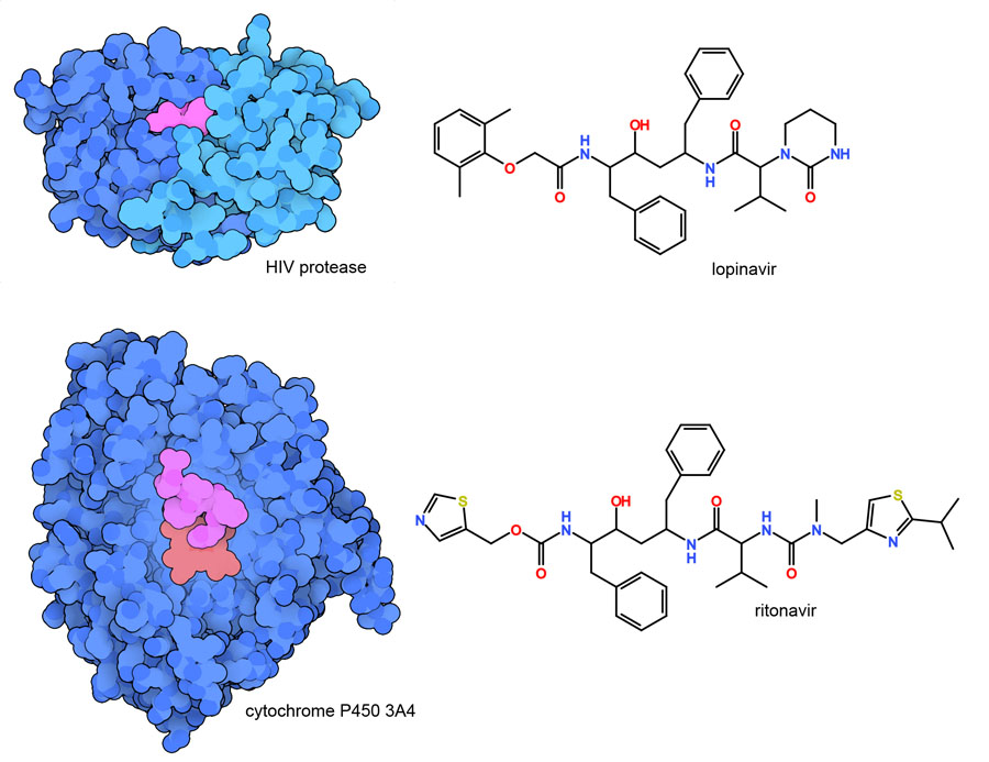 Lopinavir (magenta) binding to HIV protease is shown at the top, and ritonavir (magenta) binding to a cytochrome P450 enzyme is shown at the bottom.