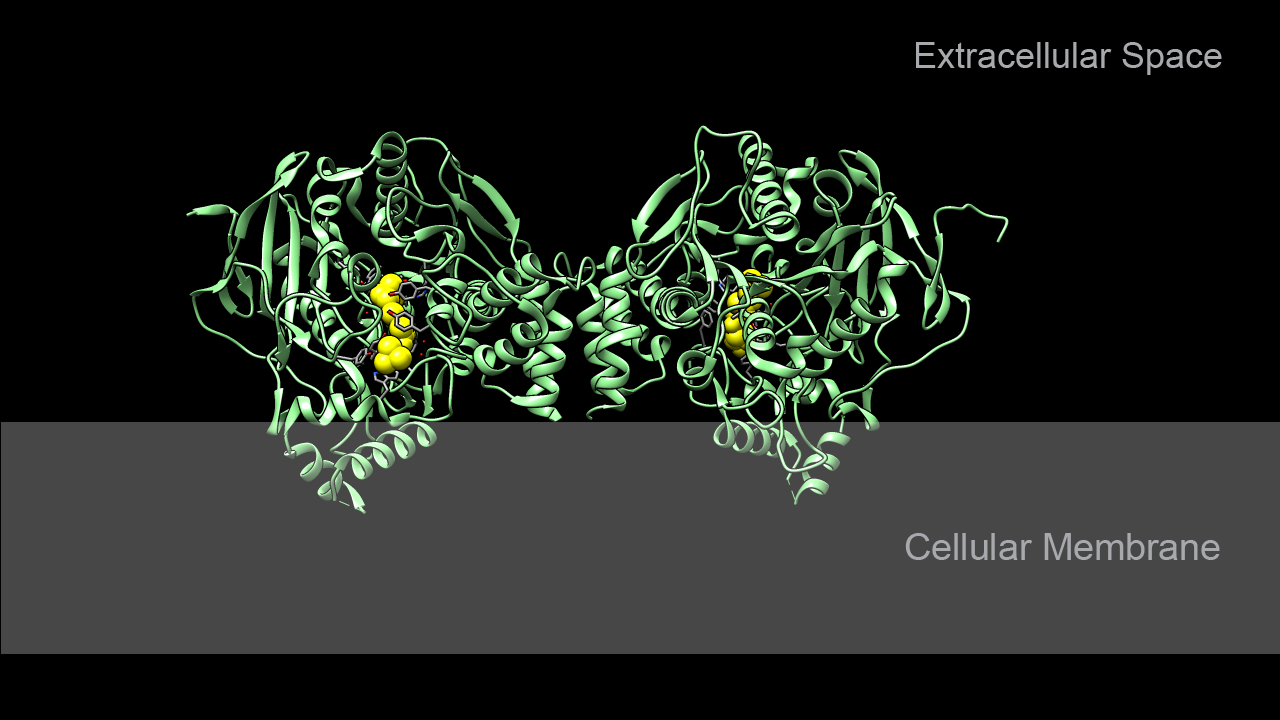 Acetylcholinesterase complexed with acetylcholine
