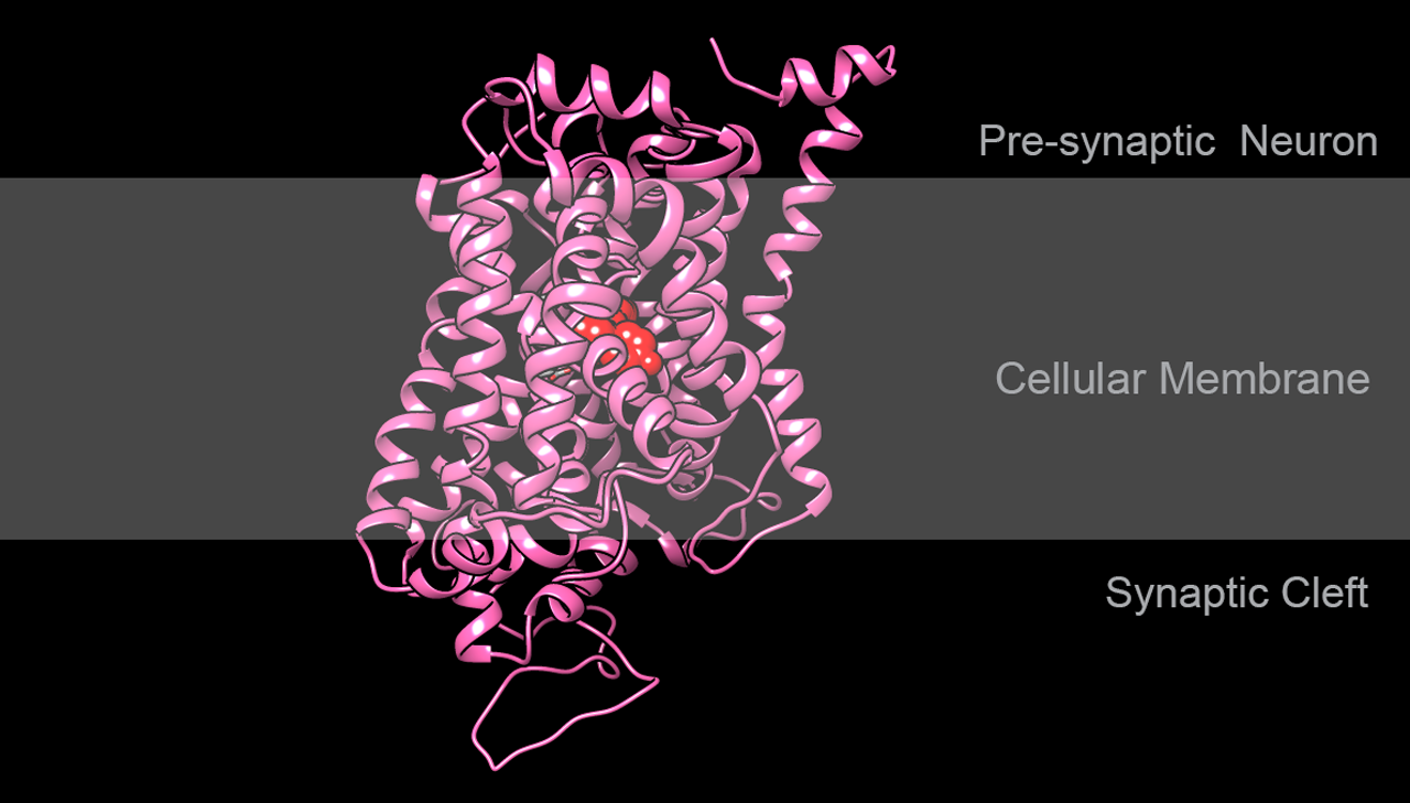 Structure of human serotonin transporter with Paroxetine bound