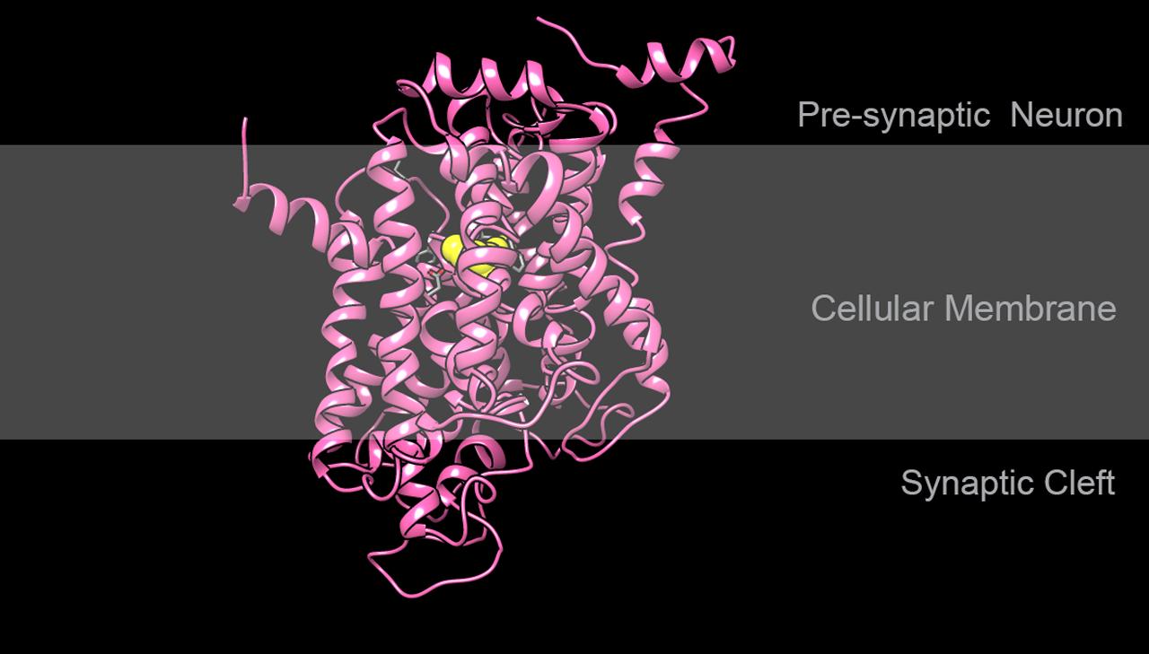 Structure of human serotonin transporter