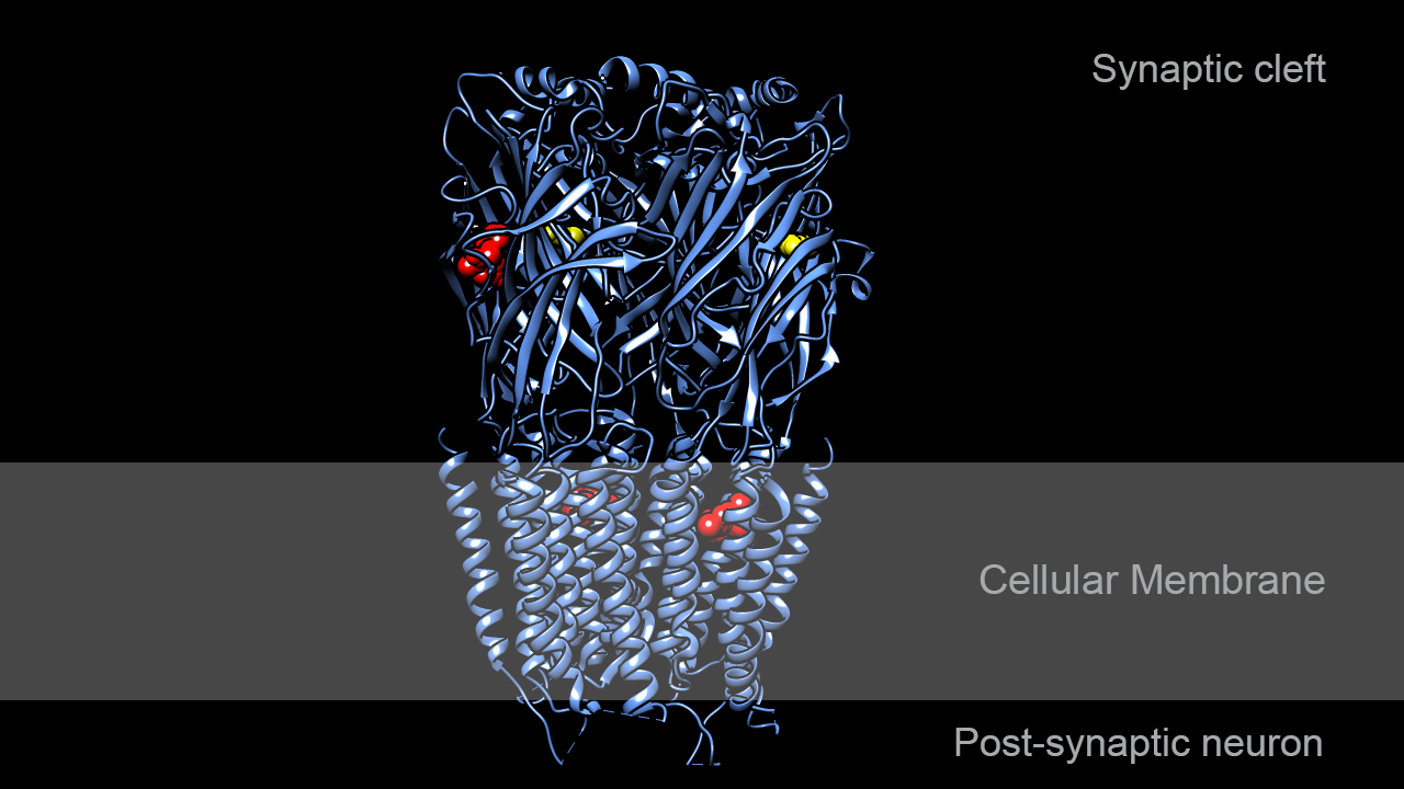GABAA receptor in complex with GABA and diazepam
