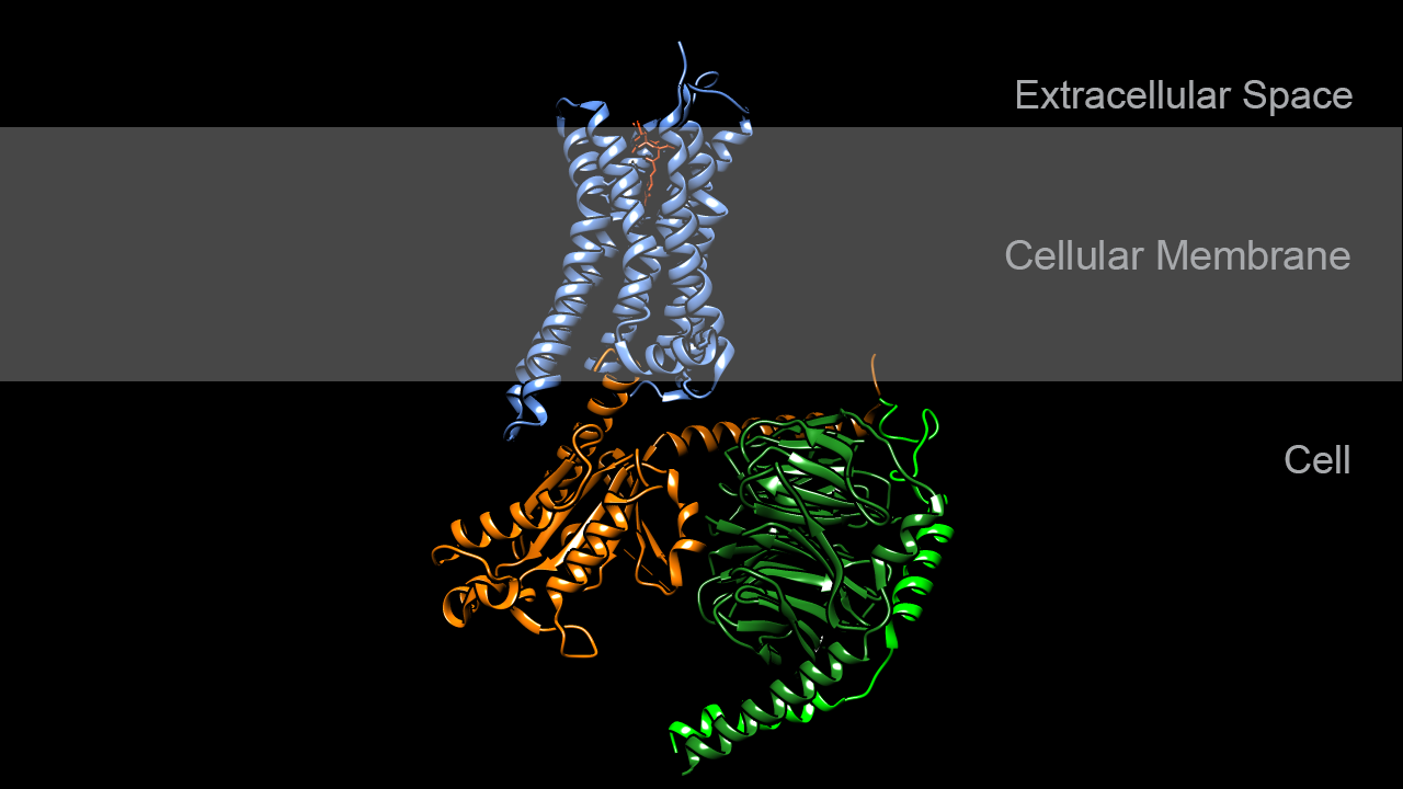 Dopamine receptor in complex with G-protein