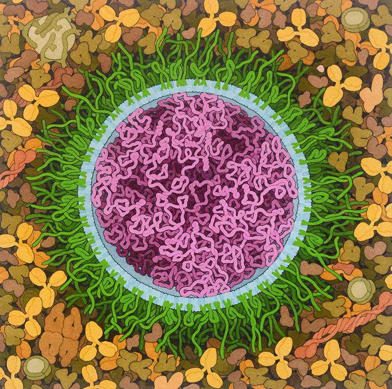 "<I>SARS-CoV-2 mRNA Vaccine</I>, 2020<BR>  Illustration by David S. Goodsell, RCSB Protein Data Bank; doi: <a href=""http://doi.org/10.2210/rcsb_pdb/goodsell-gallery-027"">10.2210/rcsb_pdb/goodsell-gallery-027</a>"