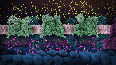 Axonal membrane with voltage gated sodium channels