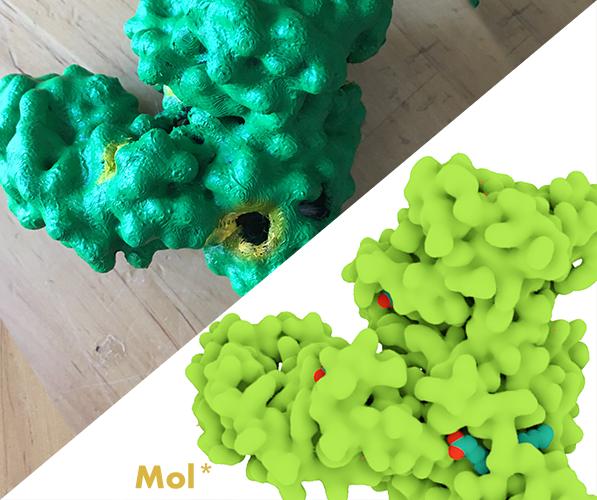 Serum albumin model next to 3D model view from MolStar