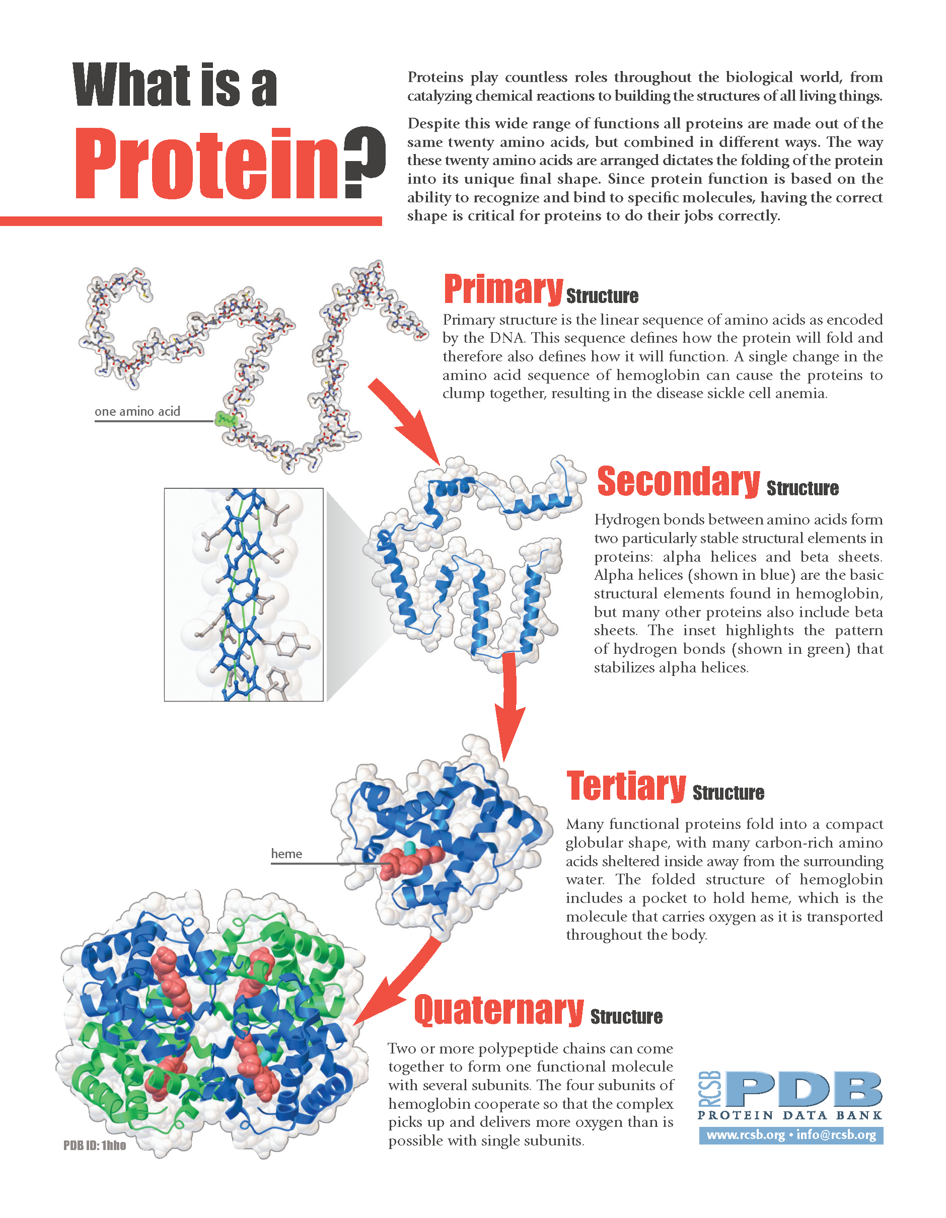 proteins play countless roles - HD1879×2420