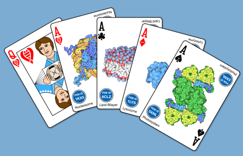 A set of PDB-themed cards created by David S. Goodsell.