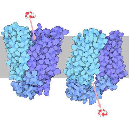 RCSB PDB Molecule of the Month