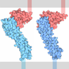 PD-1 (Programmed Cell Death Protein 1)