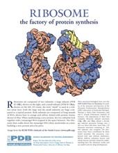 Ribosome flyer
