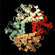 subunit structure