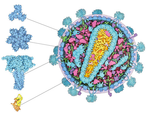 how proteins work williamson pdf