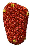 HIV-capsid